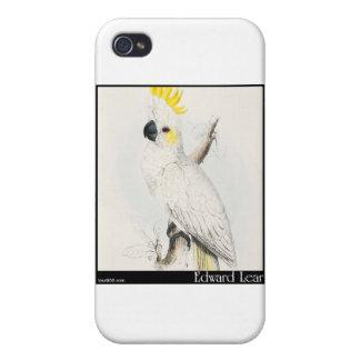 El poco Cockatoo Azufre-Con cresta de Edward Lear iPhone 4 Funda