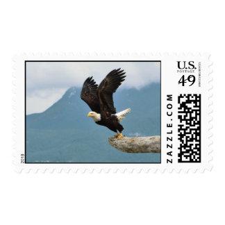 El poder del vuelo Eagle calvo sella - tamaños de Timbres Postales