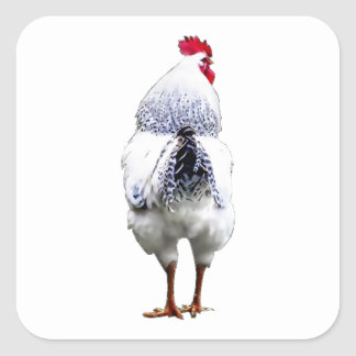 El pollo del pollo da vuelta a la cola y corre pegatina cuadrada
