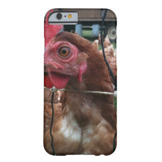 El pollo le está mirando