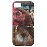 El pollo le está mirando iPhone 5 protector