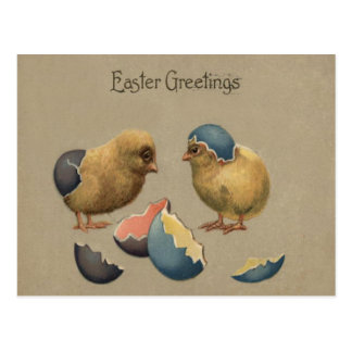 El polluelo de Pascua coloreó el huevo adornado Postal