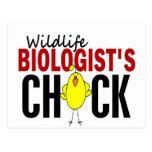 El polluelo del biólogo de la fauna postal