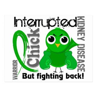 El polluelo interrumpió enfermedad de riñón 3 postales