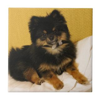 El Pomeranian más lindo Azulejo Cuadrado Pequeño