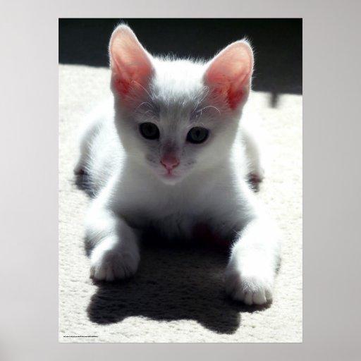 El poster blanco del gatito