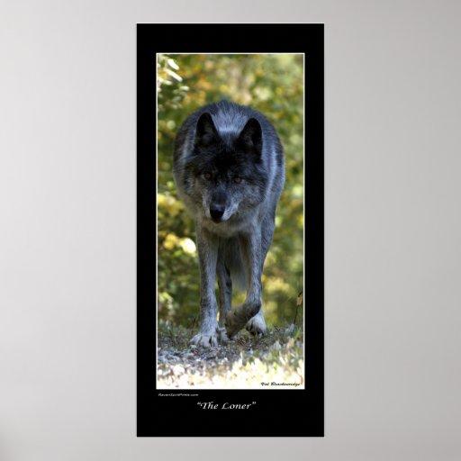 """""""El poster de la foto del lobo gris del solitario"""""""