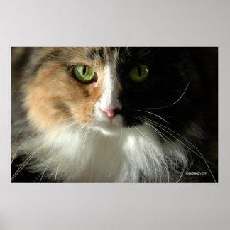El poster de los ojos de gato
