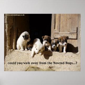 El poster de los perritos de Nowzad