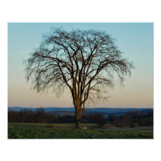 El poster del árbol póster