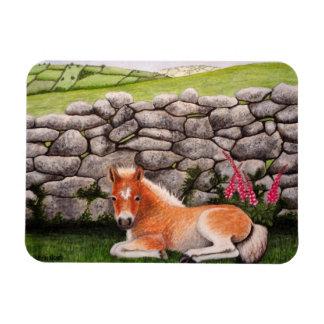 El potro de Dartmoor con el Foxglove florece el im Iman
