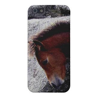 El potro del potro de Dartmoor que pica en la coli iPhone 5 Coberturas