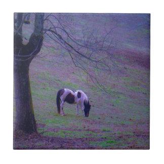 El potro pintado caballo en aguamarina púrpura co azulejo