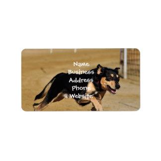 el practicar de la agilidad del perro etiqueta de dirección