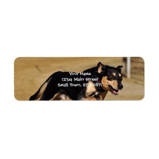 el practicar de la agilidad del perro etiquetas de remite