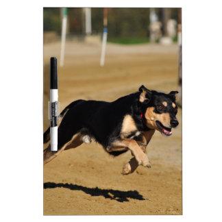 el practicar de la agilidad del perro pizarra