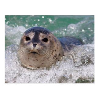 El practicar surf de la cría de foca tarjetas postales