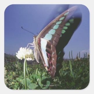 El primer de la mariposa en la flor, agitando se pegatina cuadrada