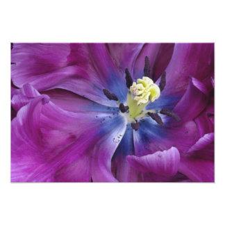 El primer del tulipán, Keukenhof cultiva un huerto Cojinete
