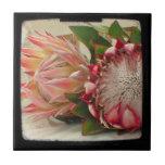 El Protea rosado florece la foto de TTV Teja Ceramica