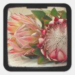 El Protea rosado florece la foto de TTV Pegatina Cuadradas Personalizadas