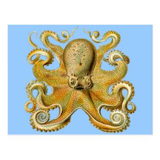 El pulpo de Ernst Haeckel Postales