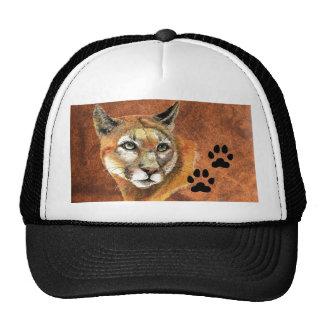 El puma, puma, león de montaña, sigue la gorra de