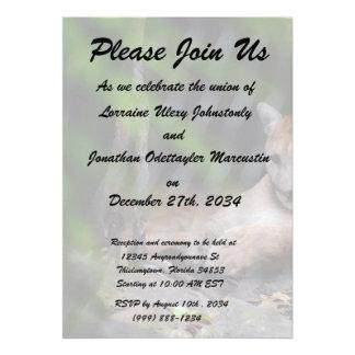 el puma que se sienta en cepillo de la cueva frota invitaciones personalizada