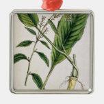 """El rábano picante, platea 415 """"de un herbario curi ornamento para arbol de navidad"""