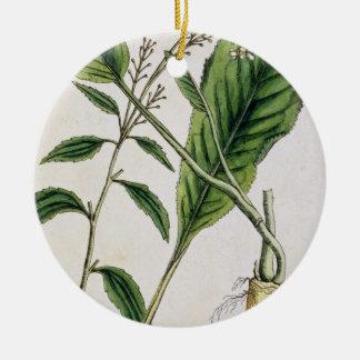 """El rábano picante, platea 415 """"de un herbario curi adornos"""