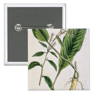 """El rábano picante, platea 415 """"de un herbario curi pins"""