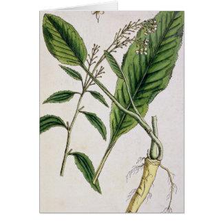 """El rábano picante, platea 415 """"de un herbario curi tarjeta de felicitación"""