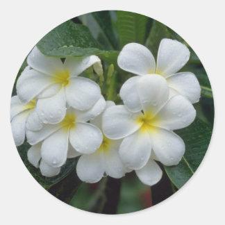 el racimo blanco de Prestine de templo florece las Pegatina Redonda
