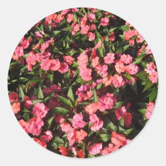 El racimo de Impatiens florece rojo Pegatina Redonda