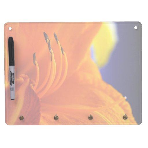 El ramo anaranjado del lirio horizontal seca al ta pizarra