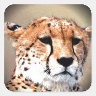 El rasgón del guepardo marca Hakunamatata Pegatina Cuadrada