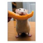 ¡El ratón de Marty ama Cantaloops!