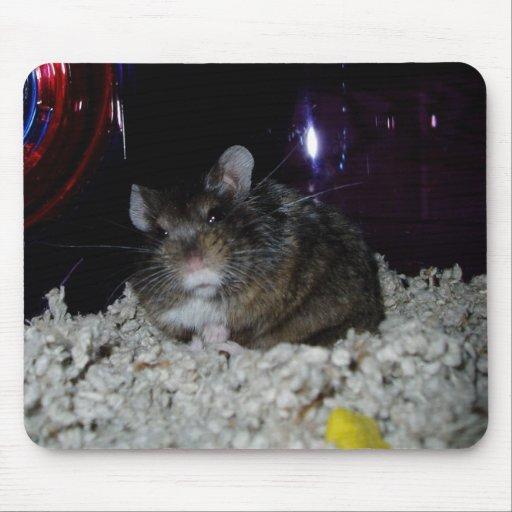 El ratón de Rafael, errr, cojín del hámster Tapetes De Raton