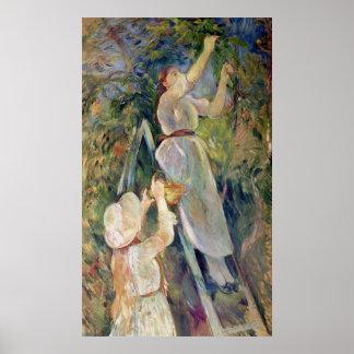 El recogedor de la cereza póster