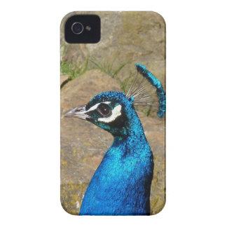 El retrato del pavo real carcasa para iPhone 4 de Case-Mate