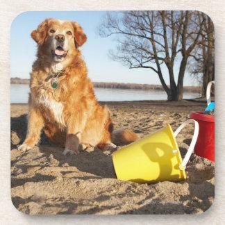 El retrato del perro en la playa con la arena jueg posavasos de bebida