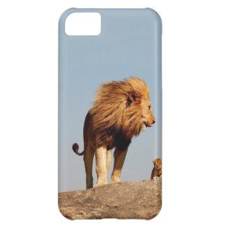 El rey del león (león y Cub adultos)