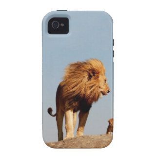 El rey del león (león y Cub adultos) Vibe iPhone 4 Carcasa