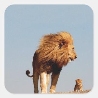 El rey del león (león y Cub adultos) Calcomania Cuadradas Personalizadas