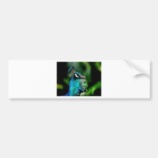 El rey del pavo real etiqueta de parachoque