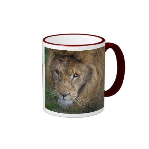 El rey Mug Tazas