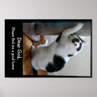 El rezo del gato del refugio póster