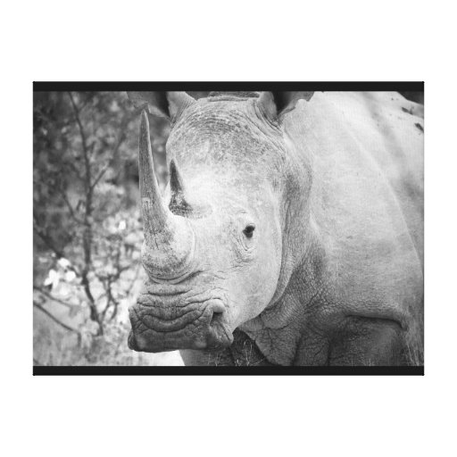 El rinoceronte blanco africano envolvió la impresi lienzo envuelto para galerias