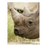 el rinoceronte se cierra para arriba tarjeta postal