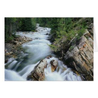El río Crystal, bosque del Estado de Gunnison, Tarjeta De Felicitación